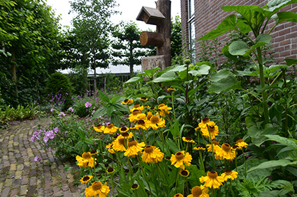 Zonnehoed in border in hillegomse showtuin